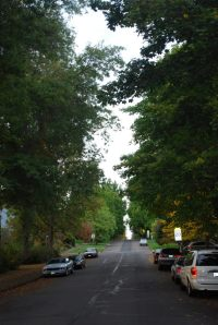 Many of the residential streets in the South University area have luscious trees with many parked cars.