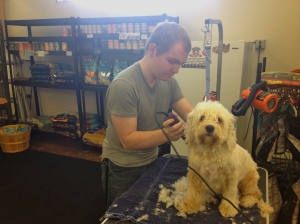 A dog's owner uses the self-serve dog grooming station